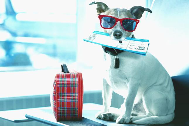 SkyUp объявил о старте воздушных перевозок для животных: куда летим