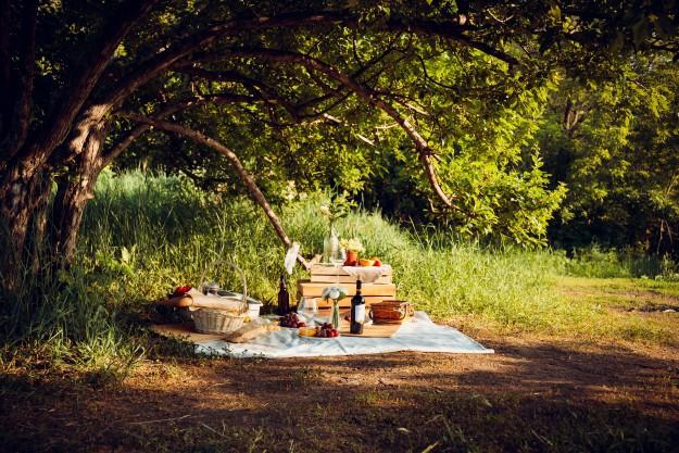 Где в Киеве можно устроить пикник на природе: список разрешенных зон для отдыха