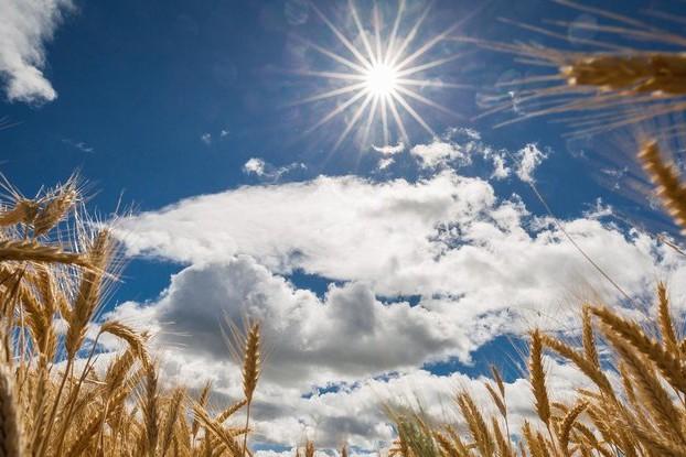Сухо и жарко: какая погода ожидает украинцев на следующей неделе