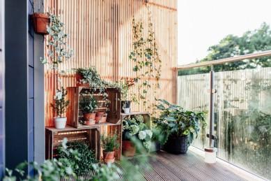 7 лучших растений для балкона