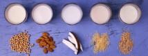 Чем заменить коровье молоко: виды растительного молока, плюсы и минусы