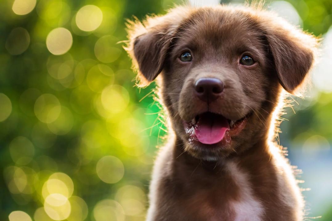 Будьте так добры: как и зачем помогать бездомным животным