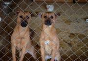 Помоги котикам и собачкам: как все устроено в Гостомельском приюте под Киевом