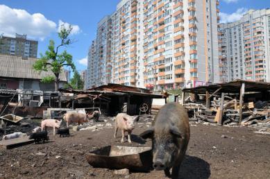 Хватит это терпеть: 7 типов киевлян, которые портят город