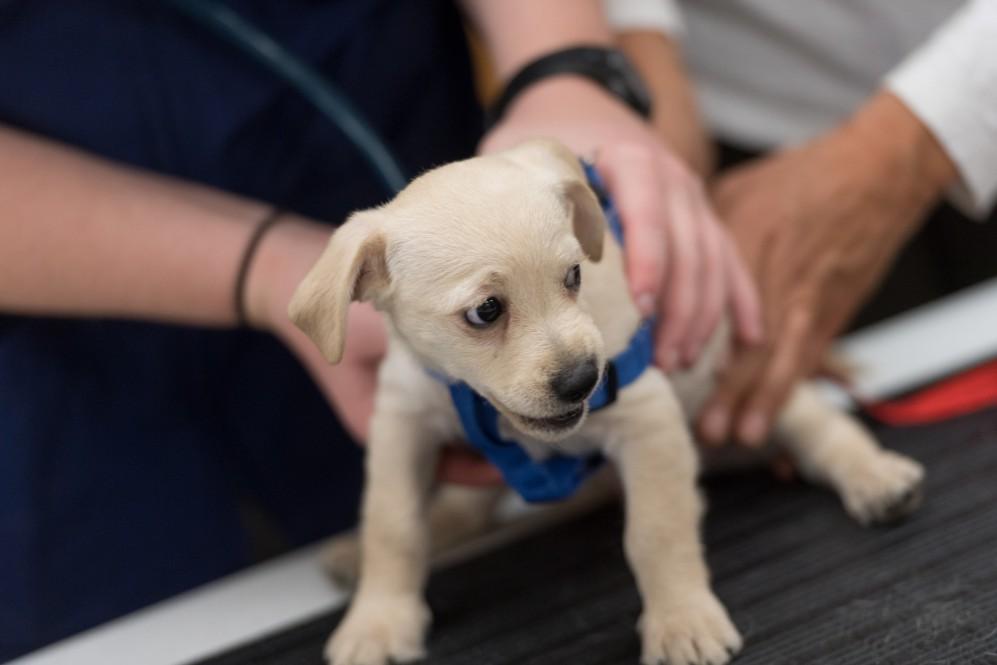 Купи собачку: где можно присмотреть щенка и как проверить его здоровье