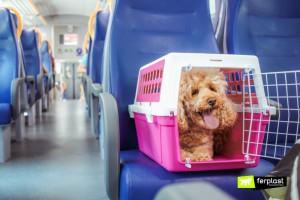 Как путешествовать с собакой: основные правила