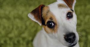 6 приютов для животных в Киеве, где собаки и коты очень ждут вас