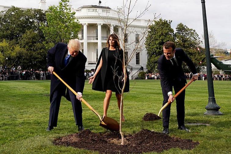 Трамп и Макрон посадили дерево возле Белого дома. Но что-то пошло не так