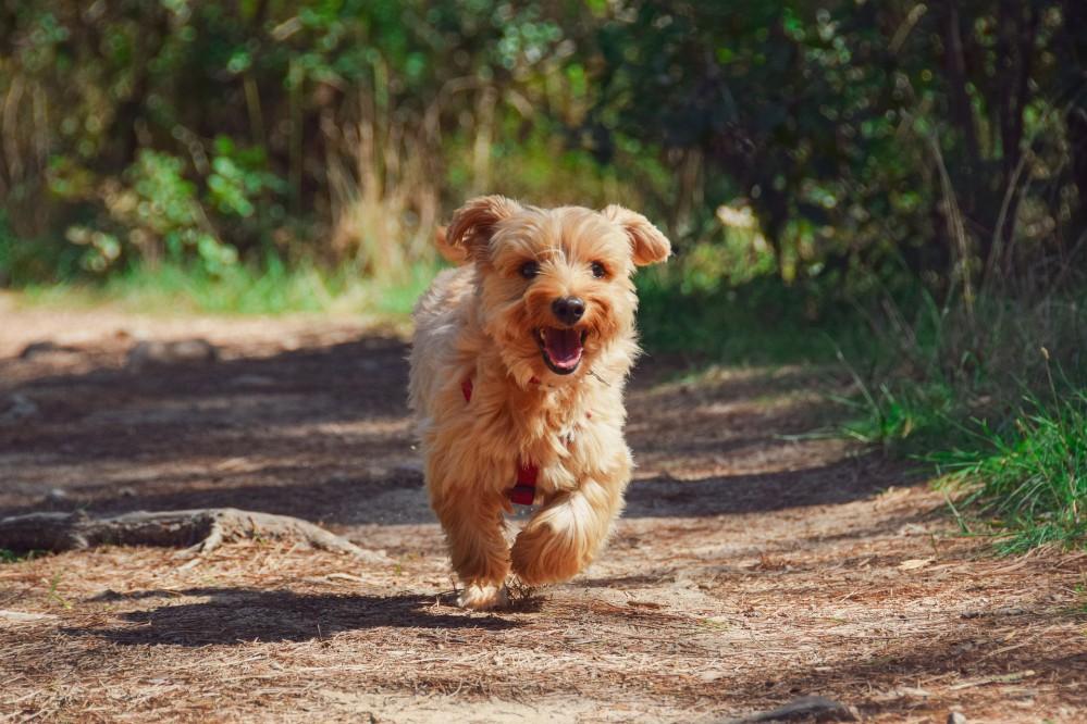 Гуляйте осторожно: как защитить собаку от клещей и инфекций