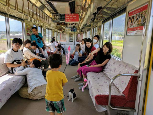 Пушистый рейс: в Японии запустили поезд с котами