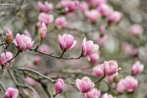Там, где магнолии цветут! 8 заведений Печерска, куда стоит заглянуть после ботсада