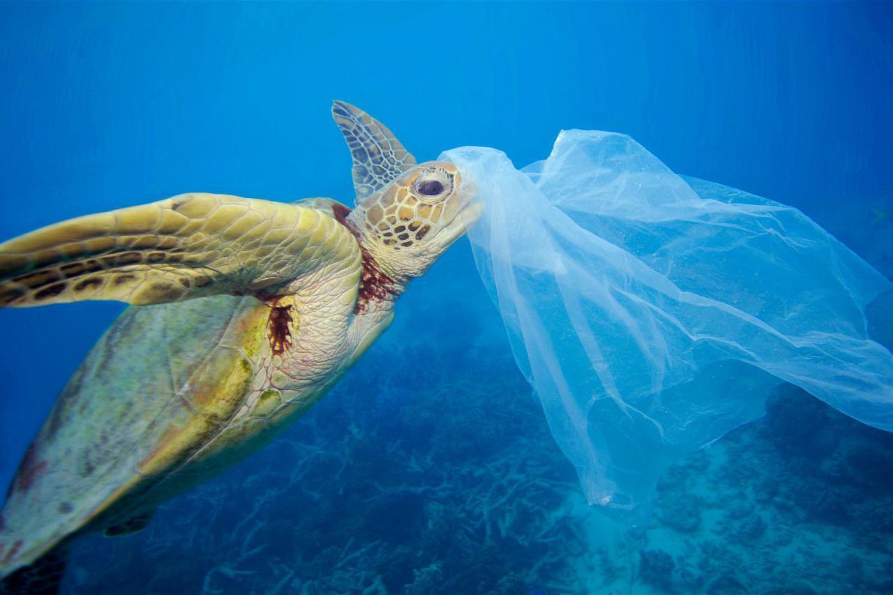 На конкретном примере: чем заменить пакеты, стаканы и губки, чтобы не загрязнять природу
