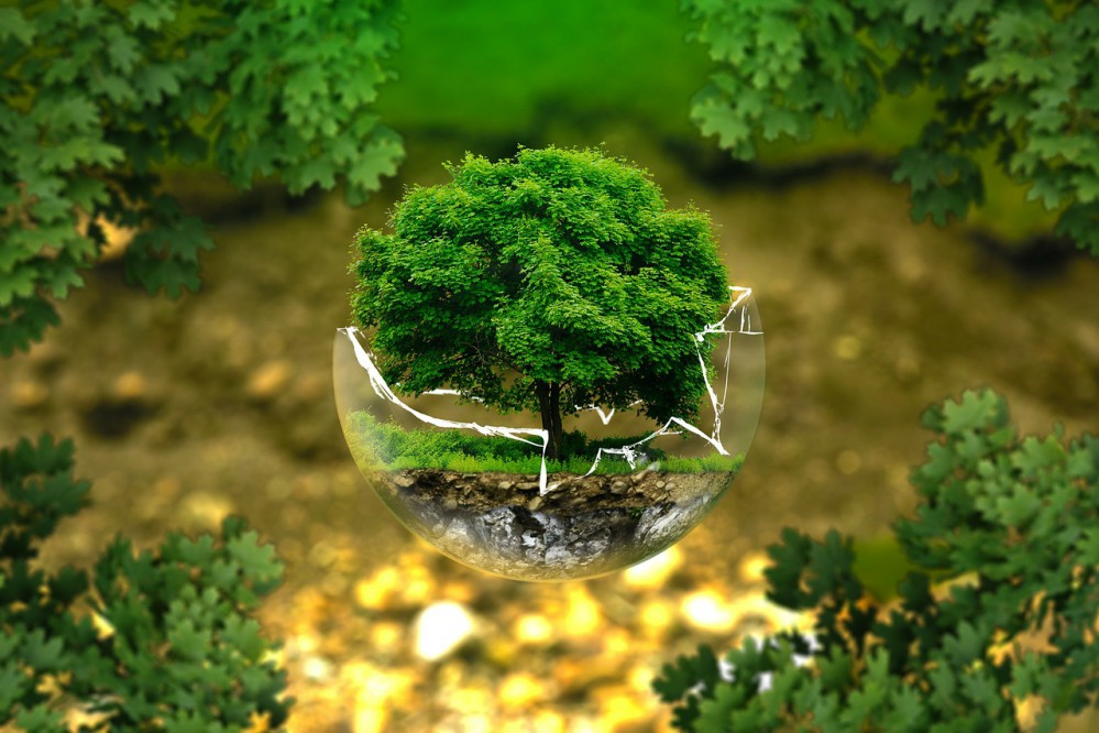 В Киеве планируют разработать экологическую стратегию