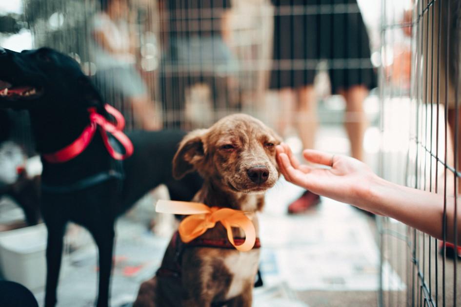 Жестокое обращение с животными: на самолете МАУ погибло около 40 собак во время транспортировки в Канаду