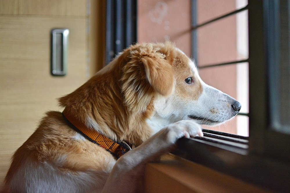 Авиакомпания МАУ не будет перевозить животных на борту самолетов