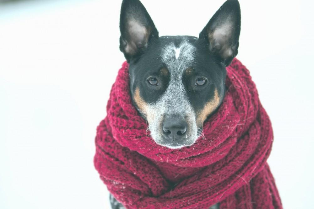 Резкое похолодание: какая погода будет на этой неделе в Киеве