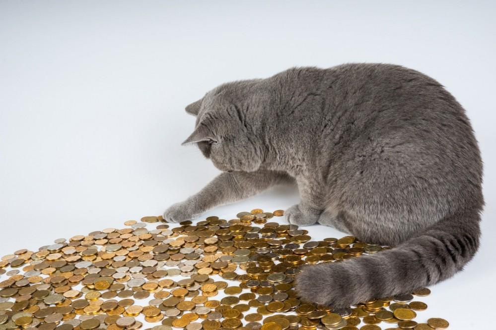 В Киеве собирают монеты, которыми нельзя будет расплатиться с 1 октября