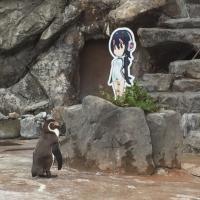 В Японии пингвин влюбился в картонную девушку. И еле пережил разлуку