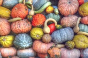 Какие сезонные овощи покупать осенью и чем они полезны: советы диетолога