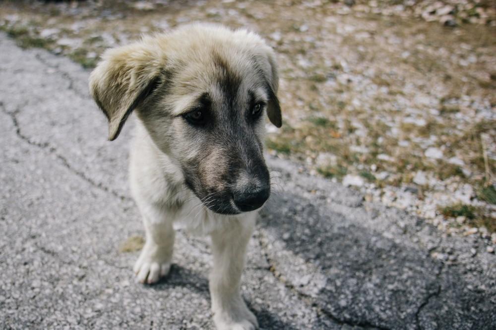 """Что такое """"щенячьи фермы"""" и почему не стоит покупать щенка через интернет"""