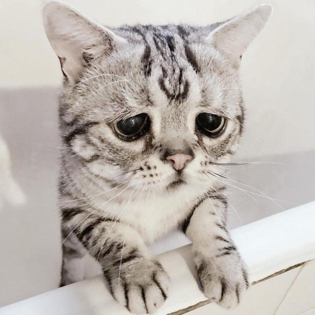 Знакомьтесь, это Луху. И она самая грустная кошка в мире