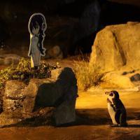 В Японии умер влюбившийся в девушку-аниме пингвин